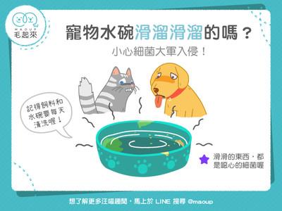水碗滑溜溜=爬滿細菌!毛孩喝了「3疾病」上身...每天洗才OK
