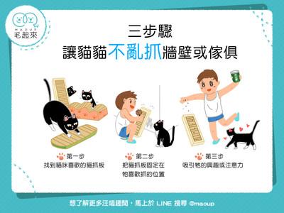 牆壁、沙發遭毒爪!3招貓貓「不亂抓」...拯救傢俱很簡單