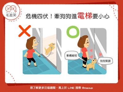 當心人狗訣別!毛孩進電梯「藏致命危機」...2招保護愛犬安全