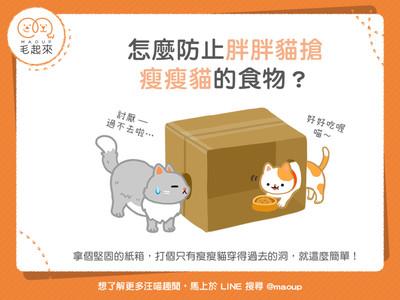胖貓愛搶食!3步驟避雙喵「爭食之戰」...和平吃飯妙招曝