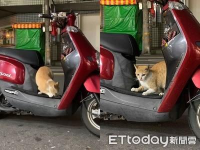 """怕新波貓躺在車上休息長指甲""""緊捏踏板""""舒適練習齊春泉"""