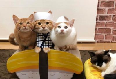 今晚客人想吃哪種壽司?歷史上最愛玩的皇帝們想出了一個新的把戲。