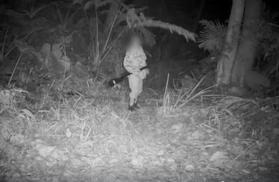"""苗栗""""山貓林""""保護石虎!現在,它拍攝的""""帶槍的獵人""""闖入。"""