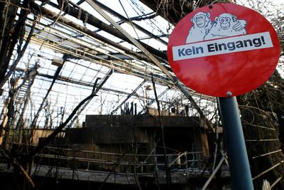 """德國動物園""""除夕大火""""30多隻猩猩被燒死"""