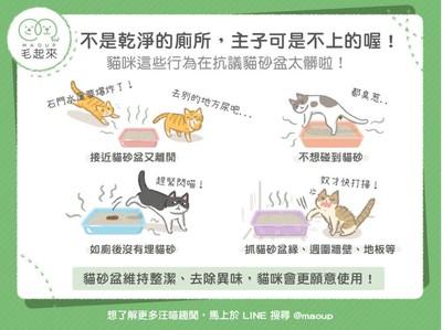 【毛孩小學堂】廁所髒了不想上?貓主子抗議貓砂盆太髒的4行為!