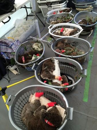 ▲洗衣籃被當作病床使用。(圖/路透社)
