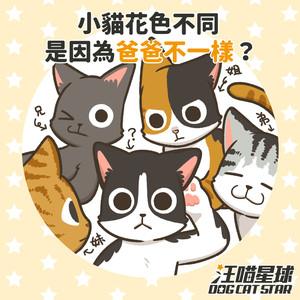 【犬貓冷知識】為何同胎小貓花色不一樣?