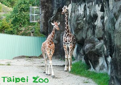 動物園加強防疫!嚴格控管動物檢疫程序 車站置消毒酒精
