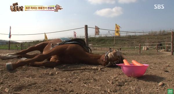 ▲▼裝上馬鞍就裝死! 南韓軟爛馬拒載客完美詮釋「不想上班」。(圖/翻攝自YouTube/SBS Story)