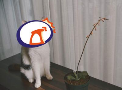 貓貓笑容逐漸母湯…網卻越看越毛 新迷因素材get!