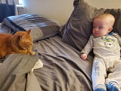 高冷喵皇假裝不喜歡寶寶 半夜溜進房陪睡…監視器洩漏愛意