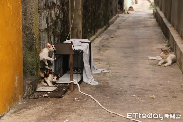 ▲▼ 台灣之心愛護動物協會自2015年開始,針對流浪貓的問題,成立「夜貓志工隊」,執行TNvR,從源頭減量,減緩與人類及野生動物的衝突。(圖/台灣之心愛護動物協會提供)