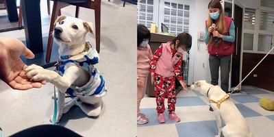 鼻頭國小校犬AKI年幼愛撲人誤傷學生 獸醫一招讓牠變乖寶寶