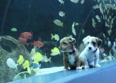 疫情害水族館閉門…雙汪興奮包場 手手趴玻璃:這些都可以吃嗎?