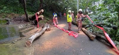 連日大雨釀災!18尖山路樹倒塌 消防人員急鋸樹開道