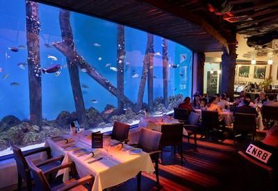 「在魚面前吃魚」 動保團體PETA痛批澳洲水族館餐廳太殘忍