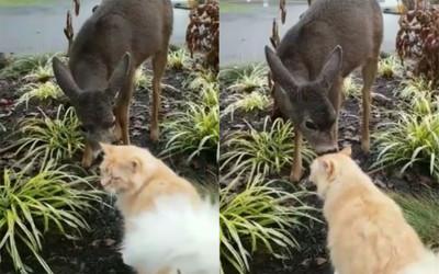 野生斑比闖庭園「陶醉吸貓」! 1.3萬網讚識貨:貓界迪士尼公主4ni?