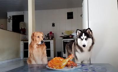 擺烤雞誘惑!哈士奇、黃金獵犬狂流口水…結局超爆笑