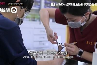 傷病都是人為!8女創「東台灣第1」野生保育協會 讓牠們在家安心