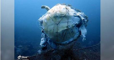 破碎屍體海底漂盪!海龜遭「廢棄刺網」纏住…無法掙脫無助慘死