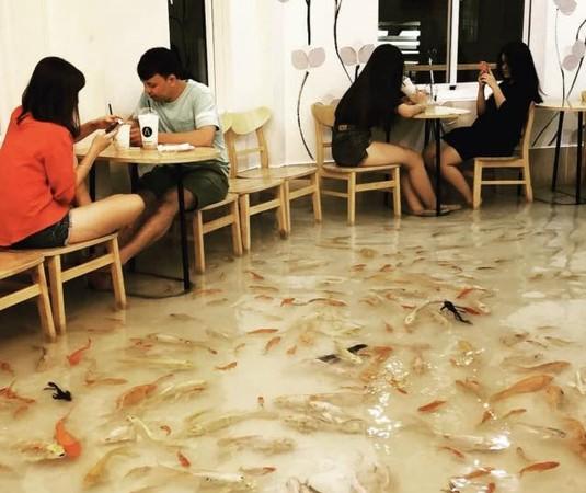 ▲越南特別寵物咖啡廳。(圖/翻攝自臉書)