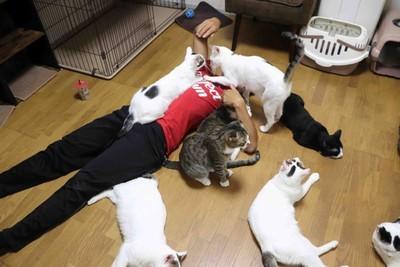 母猝死留18貓!日拳擊手快被吃垮「不願放生」:像媽媽在我身邊