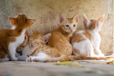 巴西貓島沒遊客 小貓喪失獵食技能驚見「貓吃貓!」