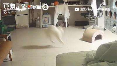 優雅貓豆漿夜生活超狂野 嗨玩反差驚呆粉絲:網紅人前真的很會裝