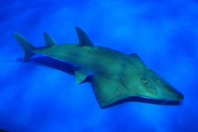 太荒謬!水族館展出認錯20年 專家鑑定驚呼「新品種有絕種危機」