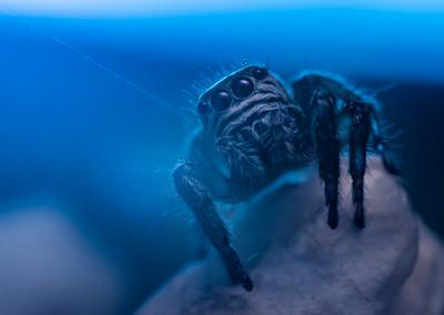 回家後院驚見「巨型8腳怪」 網:嚇得頭皮發毛