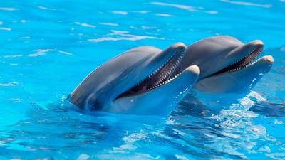 超逼真「海豚機器人」誕生 盼取代真實表演秀…讓牠們回歸大自然