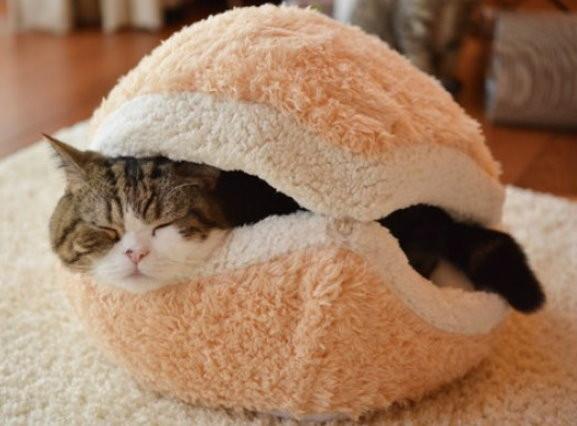「漢堡貓」!漢堡枕頭 打造貓咪小確幸
