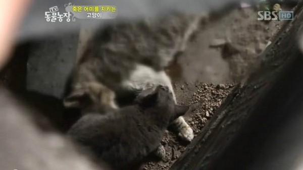 南韓,電視台,動物,貓,毛小孩