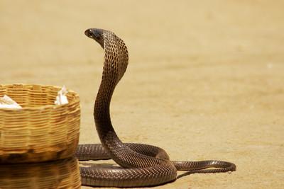 6秒砍蛇頭!鐮刀男對峙草叢毒蛇 手一揮蛇頭噴飛 ... 粉紅血塊狂蠕動