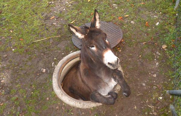 驢子示意圖。(圖/達志影像/美聯社)
