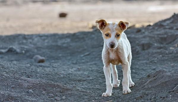 台南,流浪動物之家,善化,流浪狗,工作犬,領養
