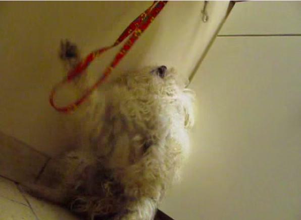 承受收容所龐大壓力 浪犬在安樂死一小時前被救出
